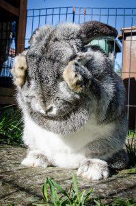 Enclot à lapin